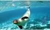 Сестрорецк и Спасатель вышли в море: в Репино выпустили исстрадавшихся тюленей-пациентов
