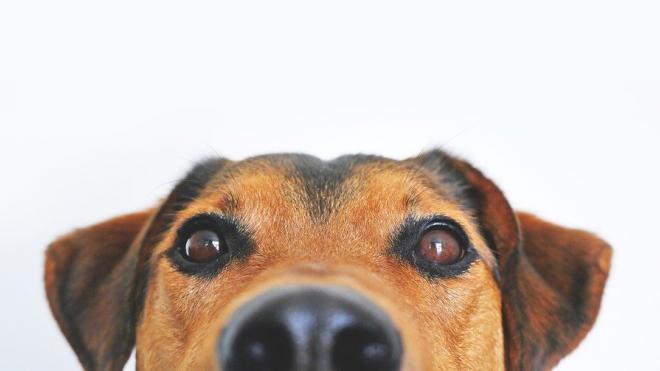 Американский учёный увидели в собаках опасность для экологии планеты