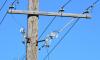 В Колпино три жилых дома лишились телефонной связи из-за вора кабелей