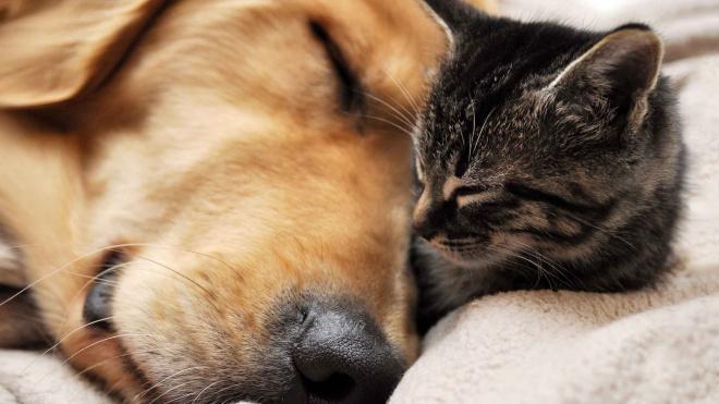 В Петербурге спасатели вызволили из залитой кипятком квартиры собаку и кота