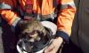 Петербуржец спас жизнь коту, застрявшего на ЗСД, а горожане нашли ему новый дом