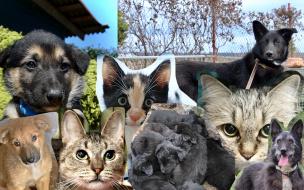 """Приюты для бездомных животных в Петербурге рассказали о своем """"карантине"""""""