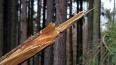 Падающее дерево ударило девушку на набережной Фонтанки