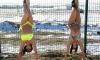 Хабаровские девушки позировали на морозе в купальниках и сапогах