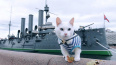 Эрмитажный кот-предсказатель Ахилл поздравил петербуржцев ...