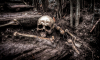В Кингисеппском районе нашли человеческий скелет