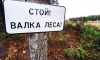 Побоище в Химкинском лесу – двоим выбили зубы, Чирикова ранена в голову