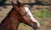 В Павловске ввели карантин из-за инфекции лошадей, которая может передаваться людям
