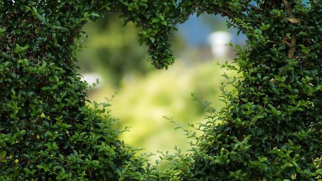 В Ботаническом саду отметят день всех влюблённых