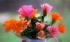 Вор украл из магазина в Зеленогорске деньги, мобильник и горшок с цветами