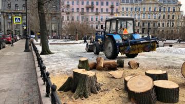 В Ново-Манежном сквере вырубили деревья