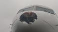 Фото: в Пулково птица пробила нос самолету