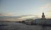 В Петербурге планируют благоустроить прибрежный намыв Васьки