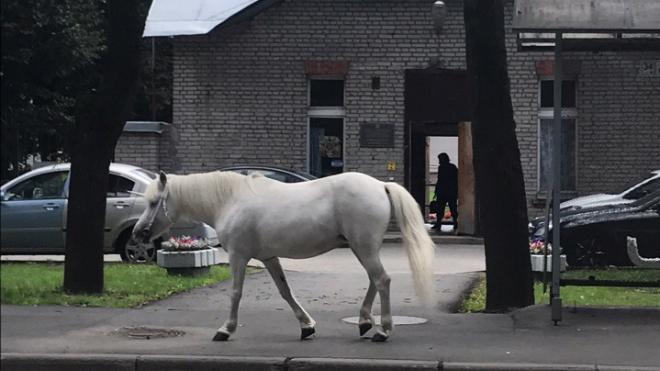 В Павловске заметили бесхозную лошадь в костюме единорога