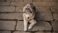 В Невском районе собака покусала лицо двухлетней девочки