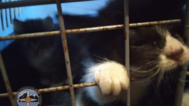 Волонтеры спасли двух котят, просидевших трое суток в вентиляционной шахте в Ленобласти
