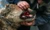 Виталий Милонов встал на защиту животных