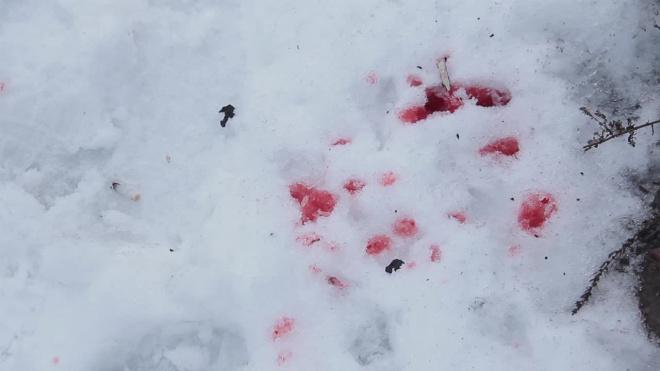 Камера видеонаблюдения запечатлела конфликт со стрельбой на Петроградке