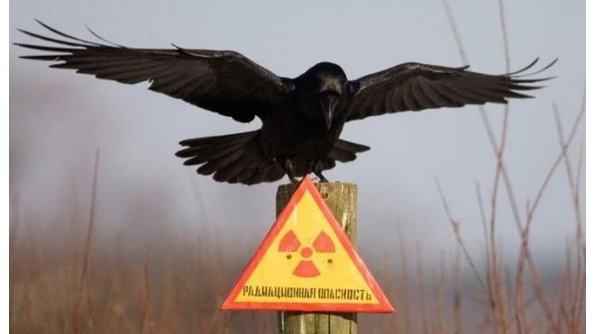 ИГ пыталось купить радиоактивные материалы у молдавских контрабандистов