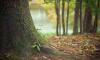 На Большом Смоленском проспекте высадят 100 деревьев
