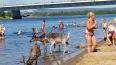 В Финляндии из-за жары олени вышли на пляж