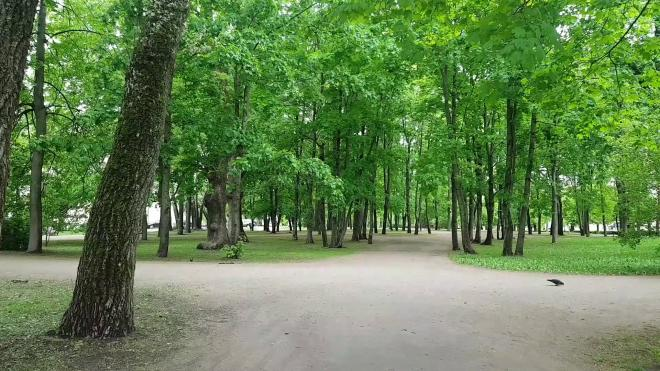 В октябре в Петербурге посадили почти 2 тысячи деревьев