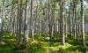 В Ленинградской области обновляется Красная книга растений
