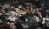 В Петербурге в сгоревшей бытовке на автостоянке нашли тело мужчины