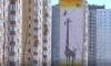 В Петербурге на 4,9 % подорожали квартиры в новостройках