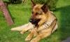 Петербуржцы узнали о смерти соседки по тревожному лаю ее собаки