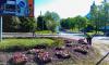 Выборг продолжают украшать цветами: в городе уже более 60 клумб