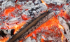 Обгоревший труп женщины нашли на пепелище под Всеволожском