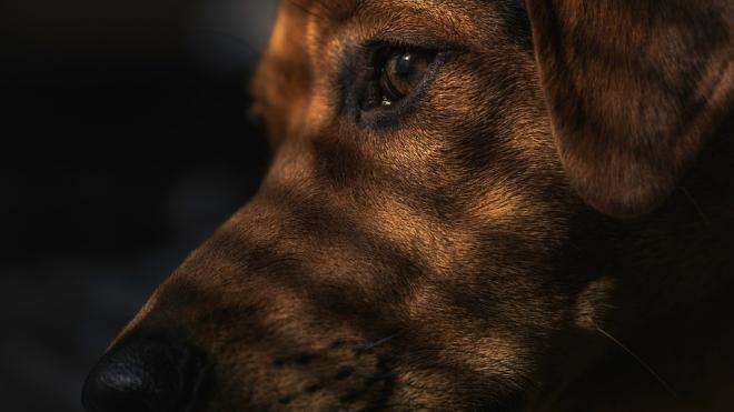 Под Гатчиной собака принесла хозяину сгнившую человеческую ногу