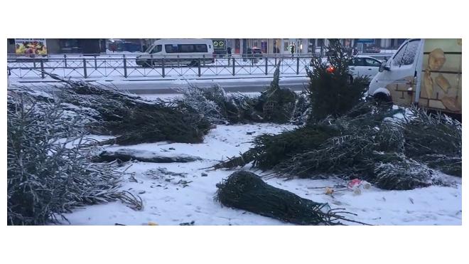 Петербуржцев просят относить новогодние елки в специальные места, чтобы помочь диким животным
