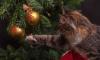 В Петербурге усилят защиту новогодних елок от вандалов