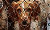 Петербургские чиновники будут давать землю в аренду под приюты для животных без торгов