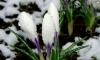 Апрель. В Петербурге идет мокрый снег
