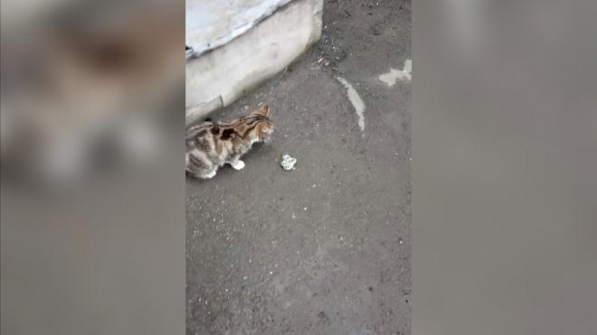 """Кошка загрызла змею у станции метро """"Владимирская"""""""