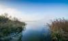 В Ленинградской области могут построить частные пляжно-парковые зоны