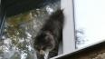 Домашний кот в Петербурге три часа висел в стеклопакете