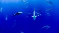 Ученые из США обнаружили первых в мире акул-вегетарианце...