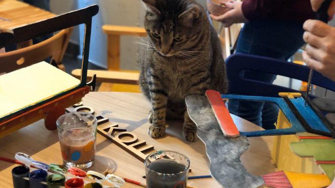 Школьники создали инсталляцию в честь котов, спасавших блокадный Ленинград