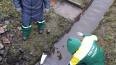 В реке Ижора собрали больше ста килограмм химических ...
