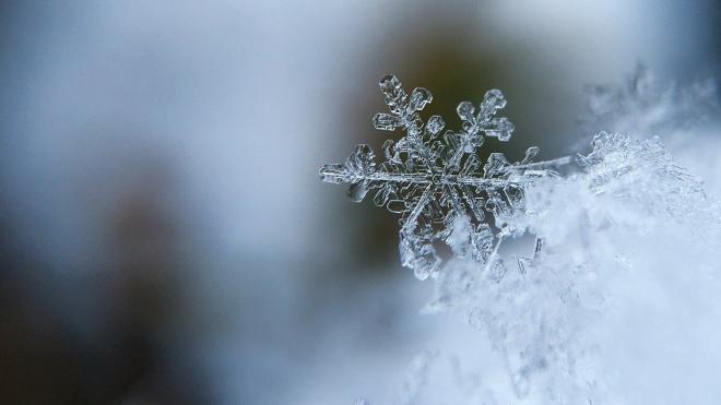 В Ленобласти 1 декабря выпадет мокрый снег