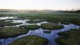 """Через """"Сестрорецкое болото"""" проляжет обновленный экологи..."""