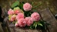 На Серафимовском почтили память жертв авиакатастрофы ...