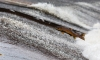 Топ мест для рыбалки в СПб и Ленинградской области