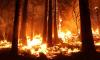Следить за паводком и пожарами в Петербурге и Ленобласти поручили армейской авиации ЗВО