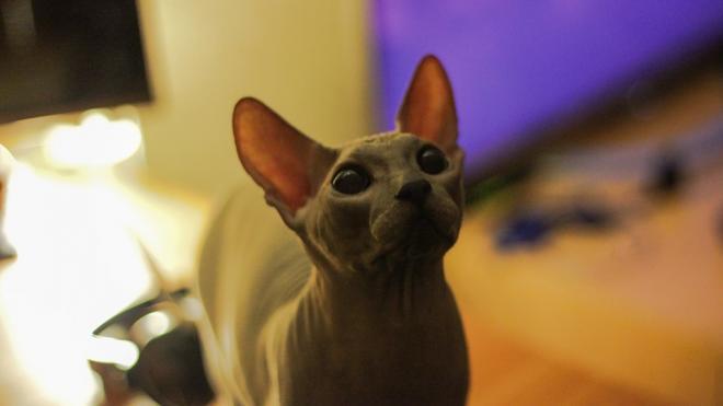 В Петербурге спасли кота, съевшего медицинскую маску