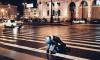 В Петербурге мужчины подрались прямо на пешеходном переходе
